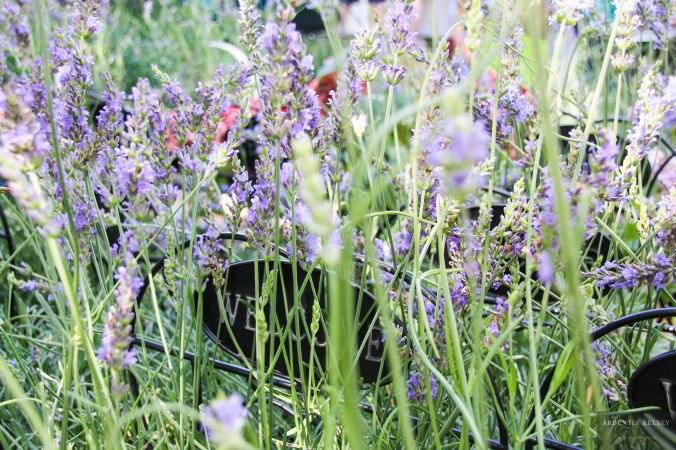 Linens in Lavender 1