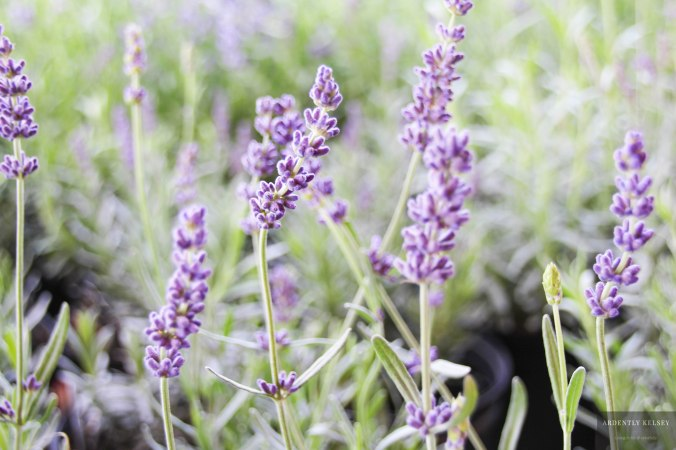Linens in Lavender 2