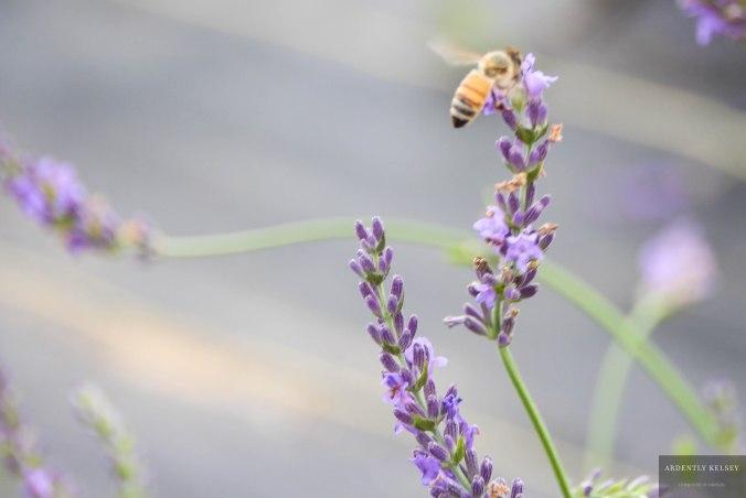 Linens in Lavender 17