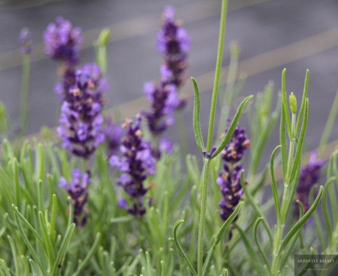 Linens in Lavender 30