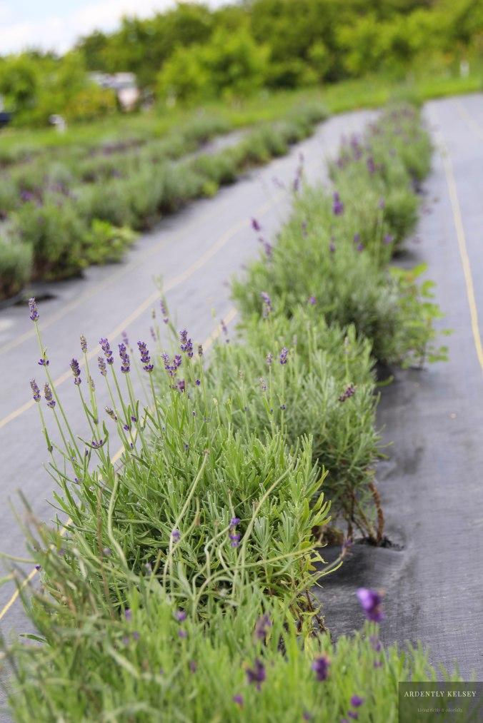 Linens in Lavender 29