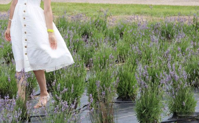 Linens in Lavender 28