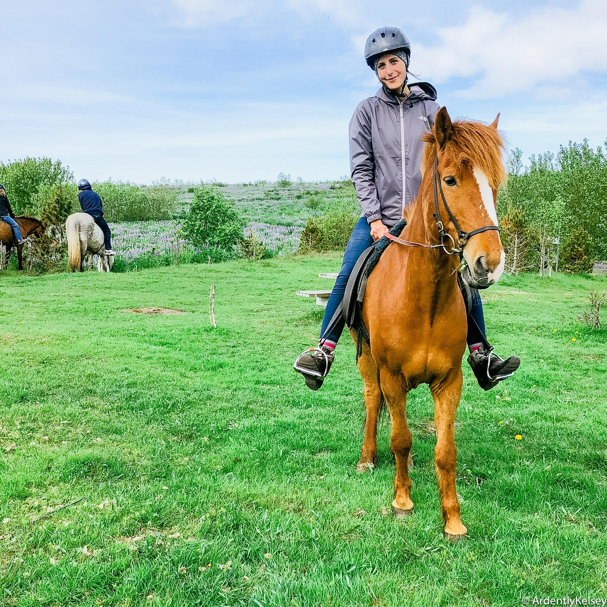 Icelandic Horses-2
