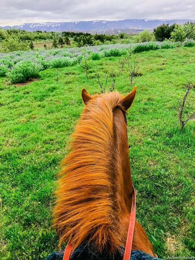 Icelandic Horses-3